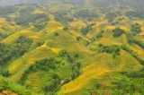 Minorities, Small World Moments and Trekking all in the Rice Fields of Sapa