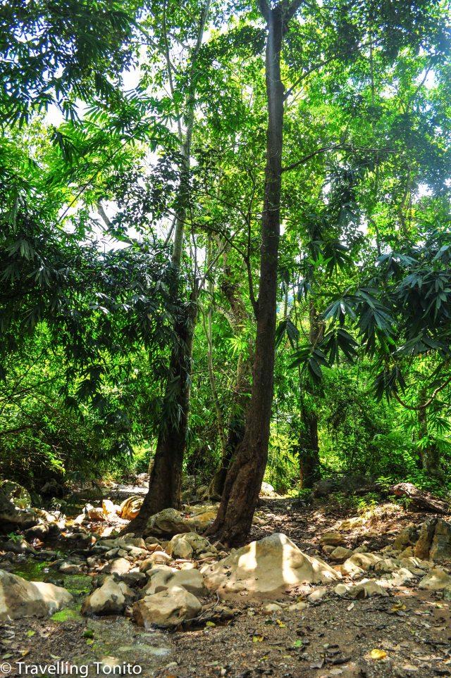The dense jungle we were trekking through